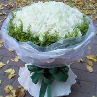 一生一世的情-66枝白玫瑰送朋友闺蜜女友老婆爱情友情白色情人节