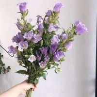 家养鲜花--紫风铃 到店取