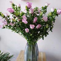 家养鲜花--粉风铃 到店取