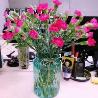 家养鲜花--玫红康乃馨 到店取