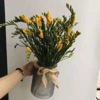 家养鲜花--黄色香雪兰 到店取