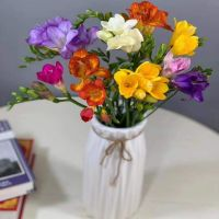 家养鲜花--混色香雪兰小束 到店取