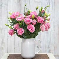 家养鲜花--粉色洋桔梗 到店取