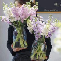 家养鲜花--紫色白色或粉色白色紫罗兰 到店取