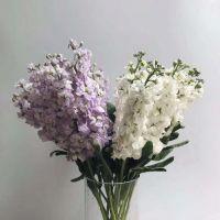 家养鲜花--紫色白色紫罗兰 到店取
