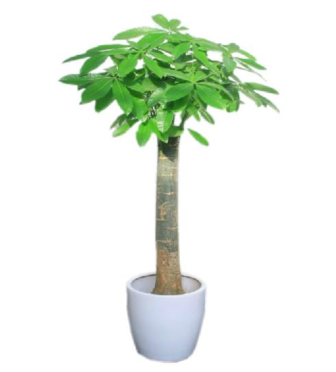 单杆发财树-寓意招财进宝